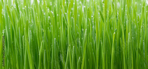 Door stickers Grass .Green wheat grass