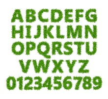 Green Grass Font. Lawn Texture Alphabet With Numbers On White Background. Vector Illustration.