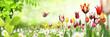 Leinwanddruck Bild Blumen 1032