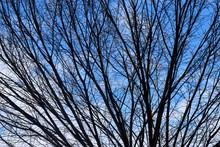 Barren Tree At Winter Time Background Athens Georgia, USA