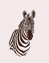 Vintage Portrait Of Zebra ,ret...