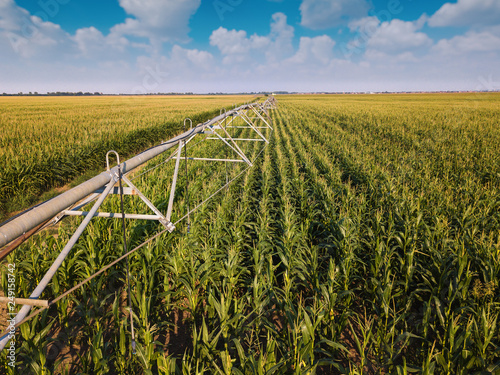 Stampa su Tela Drone photography, aerial view of irrigation system in cornfield