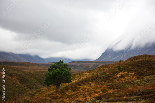 Einsamer Baum in Caingorms Nationalpark Schottland Canvas Print