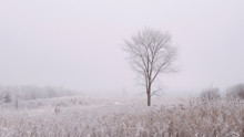Lone Tree On A Frost Covered Winter Prairie In Fog