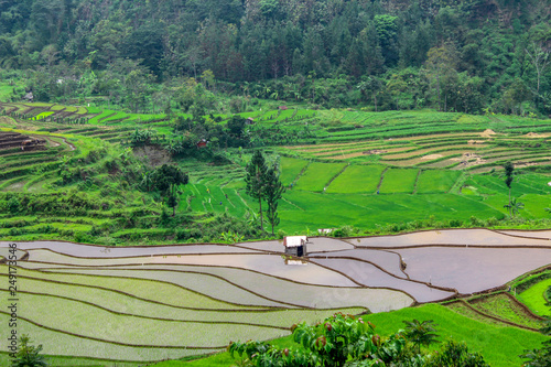 Fotobehang Olijf beautiful rice fields in Bali
