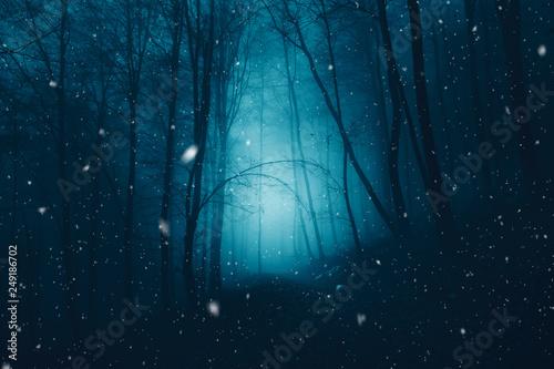 Valokuvatapetti Mystical dark blue foggy forest with snowflakes.