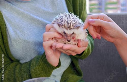 Photo  Girls peting African dwarf hedgehog in cafe shop