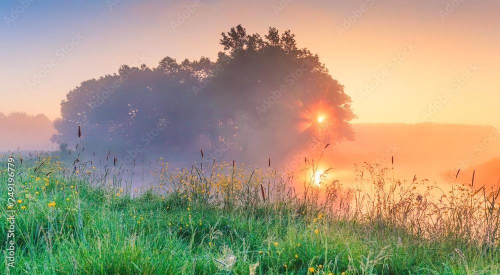 Fototapety, obrazy: Spring morning in meadow