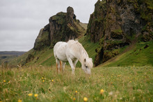 Icelandic Horse Grazing On Grassy Field Against Cloudy Sky