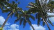 4K Postcard palm trees with crisp blue sky in the background