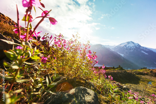Mountains meadow
