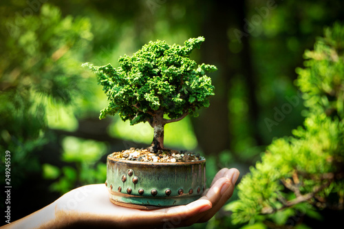 Papiers peints Bonsai Sekka Hinoki bonsai in Hand