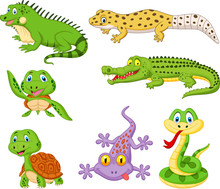 Cartoon Reptiles And Amphibian...