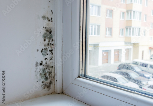 Obraz na plátne Black mould and fungus on wall near window
