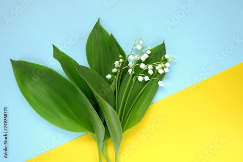 Poster Muguet de mai lily of the valley.Flower card. Lily of the valley flowers on yellow blue background. Mothers Day. International Women's Day. copy space.top view