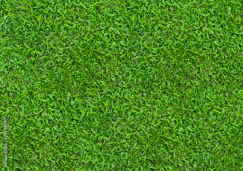 Foto op Plexiglas Groene Background of green grass field. Green grass pattern and texture. Green lawn for background.