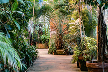 Variety Of Tropical Plants And Flowers In Botanical Garden Orangery