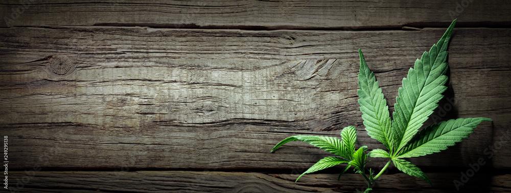 Fototapety, obrazy: Cannabis Sativa Leaves On Wooden Table - Medical Legal Marijuana