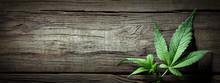 Cannabis Sativa Leaves On Wooden Table - Medical Legal Marijuana