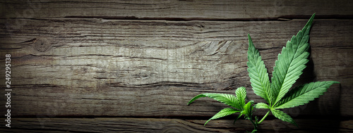Fototapeta Cannabis Sativa Leaves On Wooden Table - Medical Legal Marijuana obraz