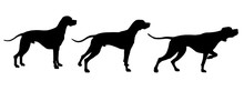 Set Of English Pointer Silhoue...