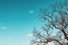 Bare Trees Branches On Blue Sky