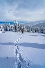 Winter Sport Activity. Woman H...