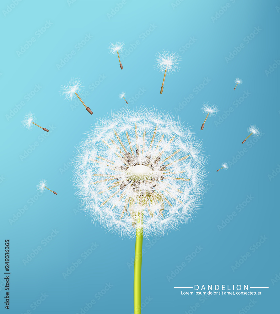 Fototapety, obrazy: Spring dandelion flower Vector realistic. Sky background soft bokeh illustrations