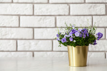 Campanula Flowers In A Golden ...