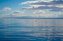 Birds At Salton Sea