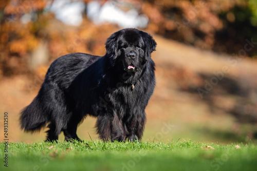 Fotografia Portrait of a dog