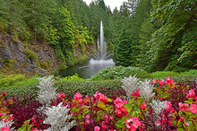 Fountain At Butchart Gardens V...