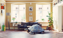 Giant Turtle In The Living Room.