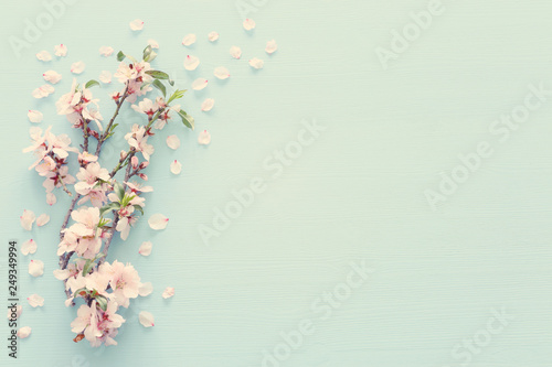 photo of spring white cherry blossom tree on pastel blue wooden background Canvas-taulu