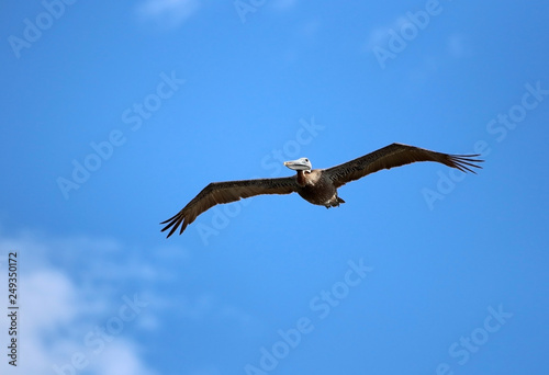 Fotografie, Obraz  Beautiful south Carolina wildlife nature background