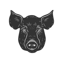 Pig Vector Head Isolated On White Background. Hog, Pork, Piglet, Swine, Boar. Farm Or Shop Meat Logo, Icon, Sign, Emblem, Symbol, Stamp. Retro Ink Engraving Style. Hand Drawing Illustration.