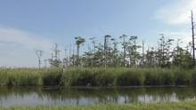 Great Dismal Swamp Marsh Water...