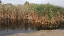 Cattail Marsh And Lagoon Saginaw Bay Lake Huron Michigan USA