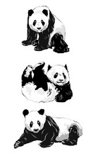 Set Of Panda Silhouettes.