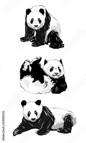 Set of panda silhouettes. Wallpaper Mural