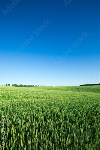 field of grass and perfect sky Canvas Print