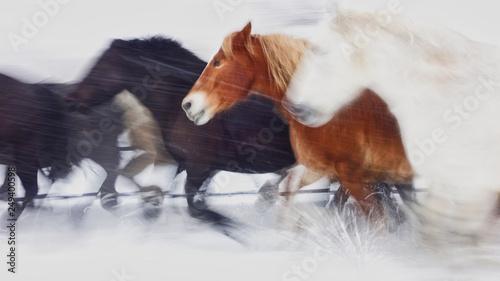 Obraz na plátne 雪原を走る馬
