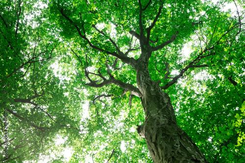 Foto auf Gartenposter Grun forest trees. nature green wood sunlight backgrounds