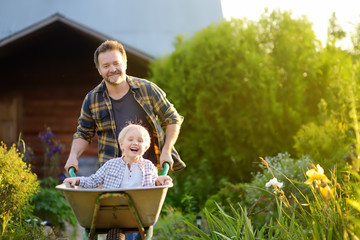 Happy little boy having fun in a wheelbarrow pushing by dad in domestic garden on warm sunny day.