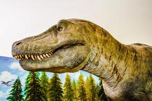 Tyrannosaurus Rex / Dinosaur S...