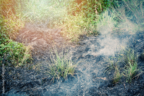 Valokuvatapetti Fire burns grass on field with smoke from wildfire in the summer