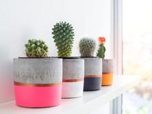 Colorful Modern Concrete Plant...