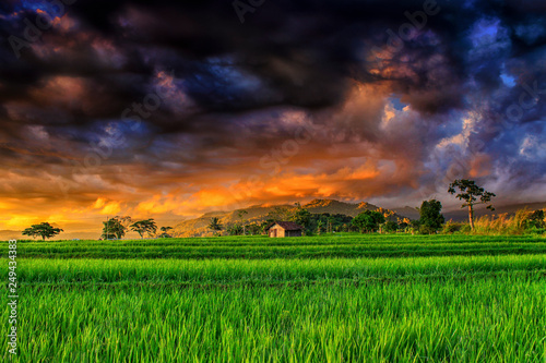Foto op Plexiglas Groene amazing sky after rain at paddy fields indonesia natural beauty of bengkulu utara indonesia with mountain barisan and green nature asia