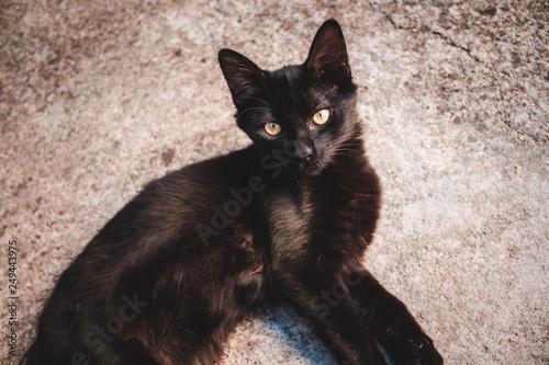 Fotomural Gato preto