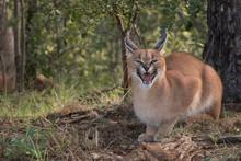 South African Safari Wildlife ...